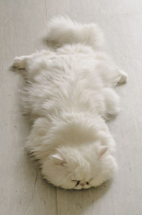 the cat rug - cute cats sleeping photos