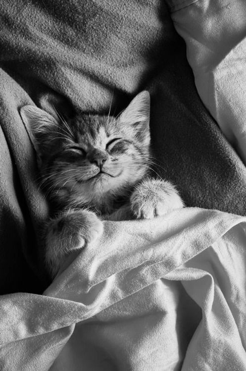 the king cat  - cute cats sleeping photos
