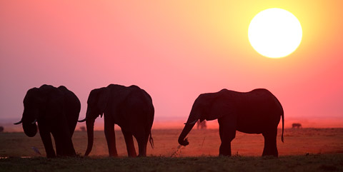 24 Most Rare African Elephants Photos That You Have Never Seen on Net