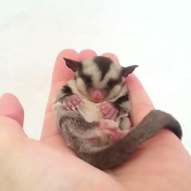 comfy little baby animal