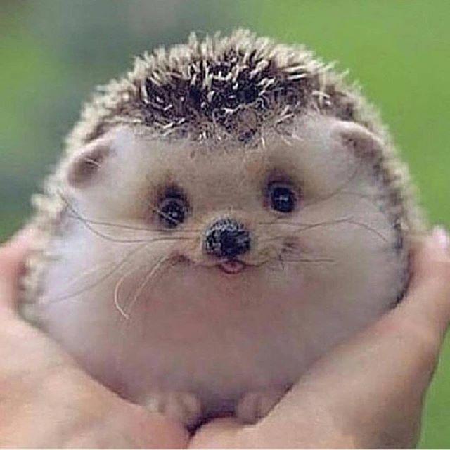 smiling baby animal