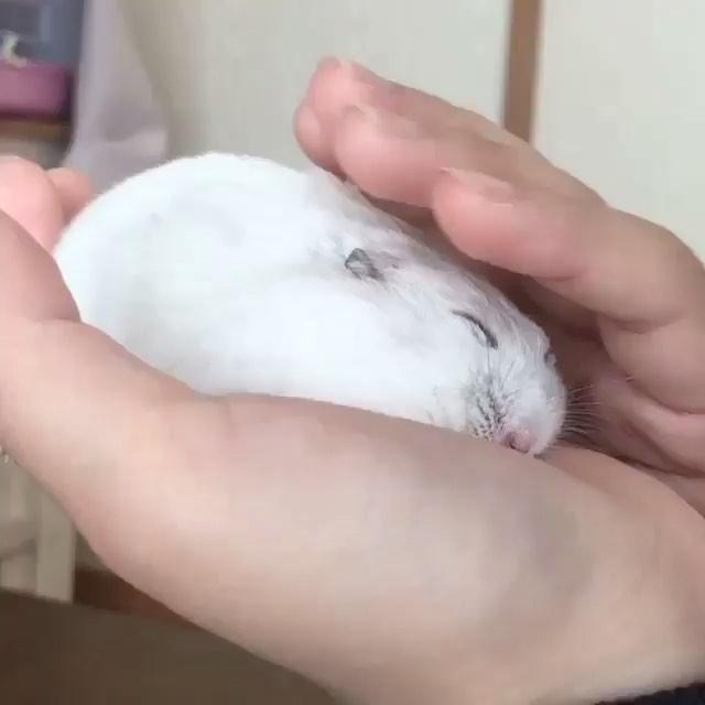 Sleeping in hand