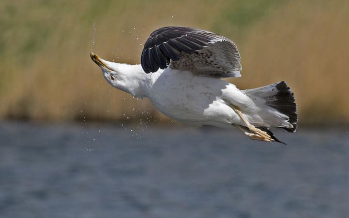animal-bird2_3436299a-large