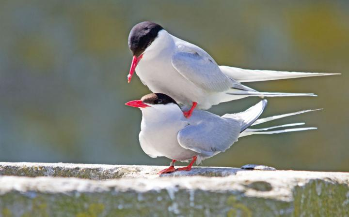 animal-birds_3436291a-large