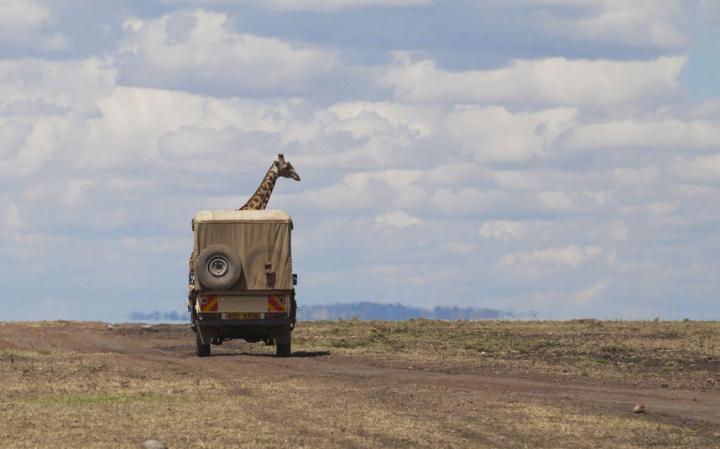 animal-giraffe_3447509a-large