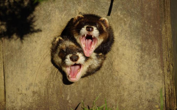 animal-screaming_3447498a-large