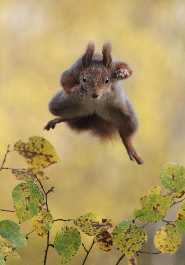 animal-squirrel3_3436267a-xlarge