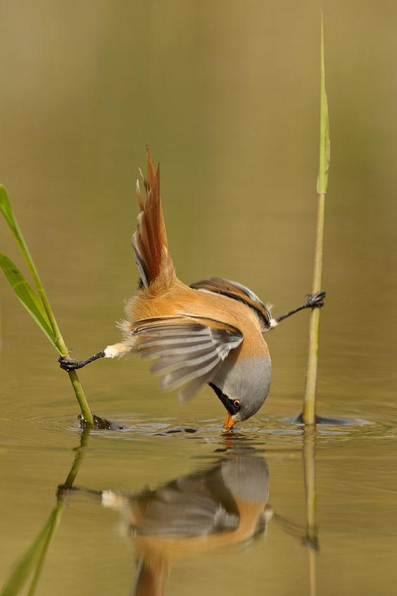 birdsaerobics