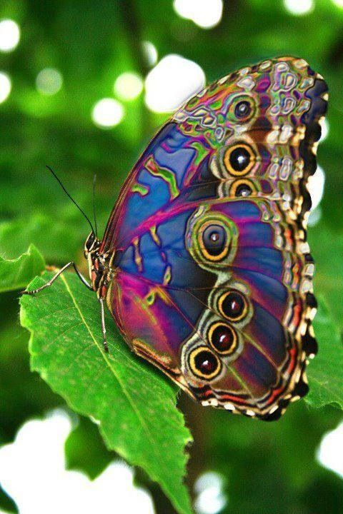 Image result for most beautiful butterfly and worm