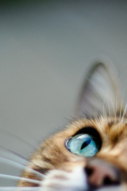 catspying
