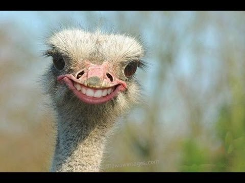 Most Funny Birds And Animals Video on Net