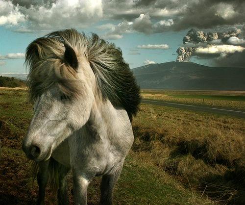 horseupforpose