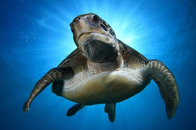 Amazing Underwater Animals- The Photos That Are Lovely