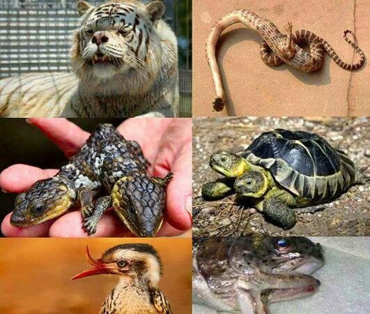 Craziest Mutation Mayhem in Animals That Are Still Living And Kicking