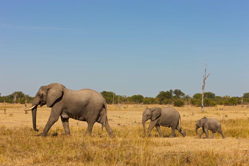 ElephantFamily.jpg.838x0_q80