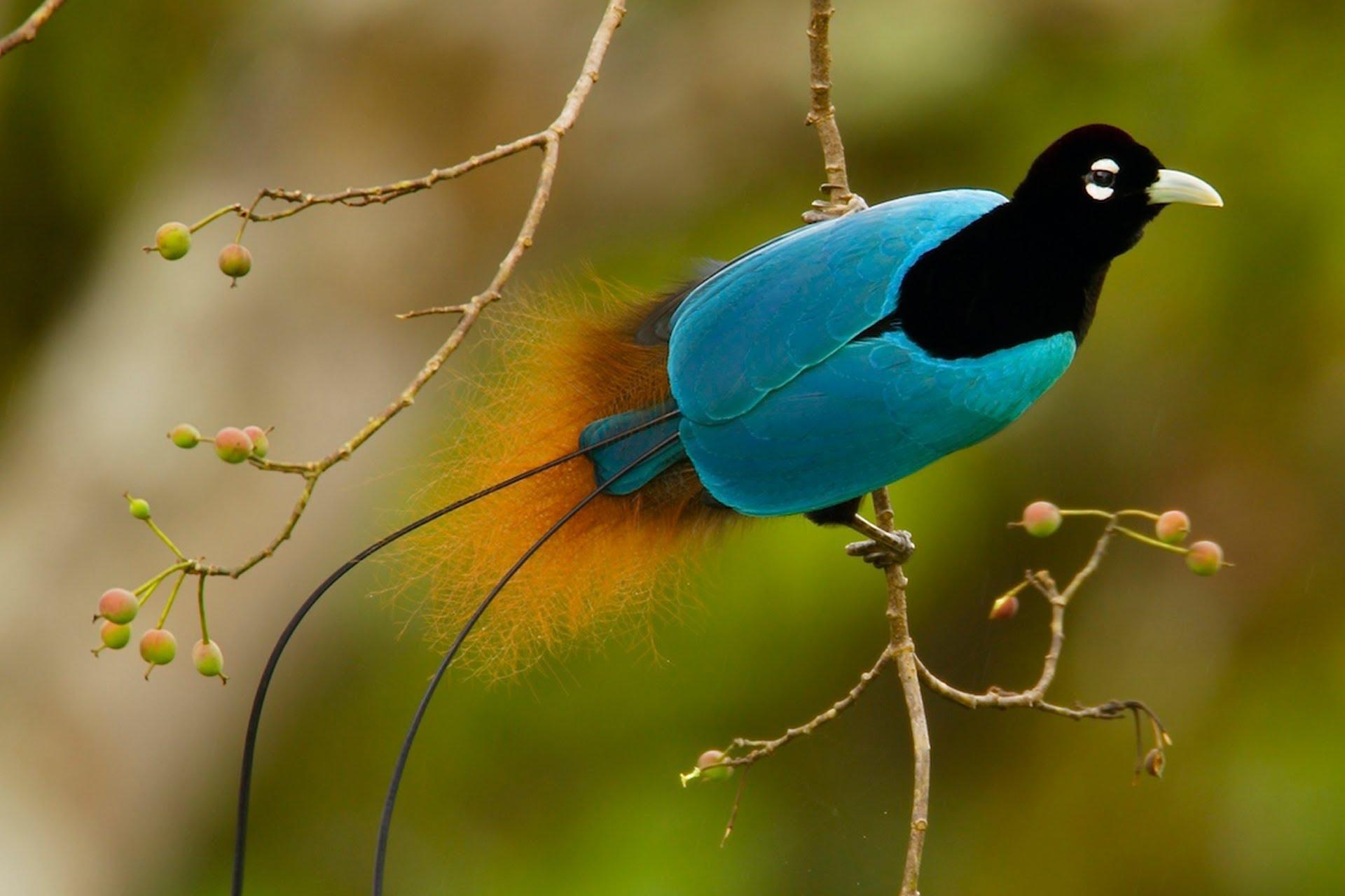 most beautiful bird of the world