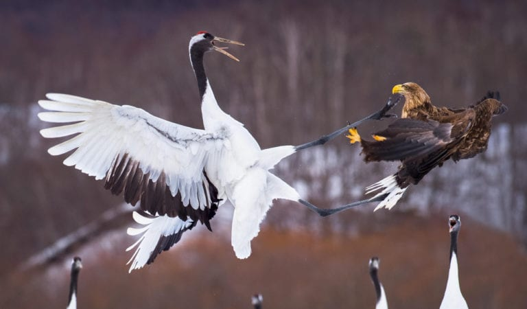 25 Bird Fights Caught On Camera – The Photos That Reveal Birds Fight For a Cause