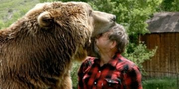 Grizzly Bear Vs Man