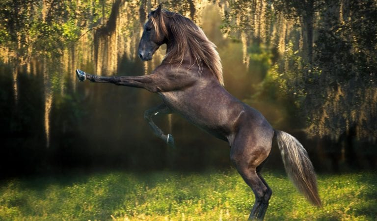 Three Funny Horse Video Compilations On Net