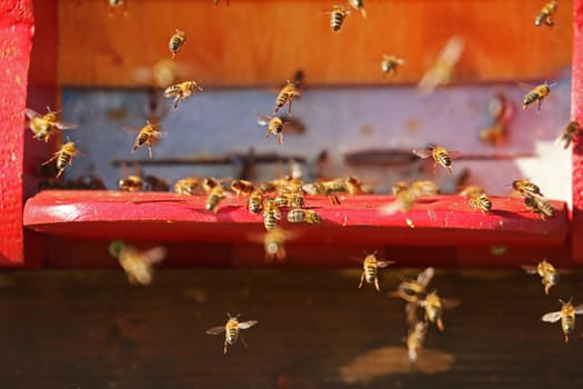 nature-insect-bee-hive-bees-40063