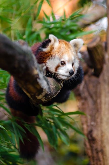 panda-hd-photos1