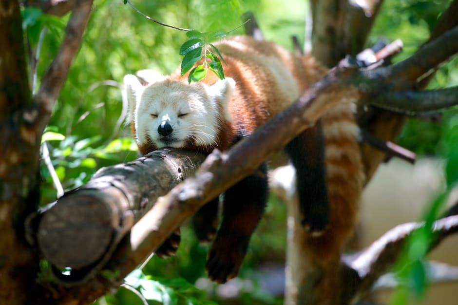 panda-hd-photos10