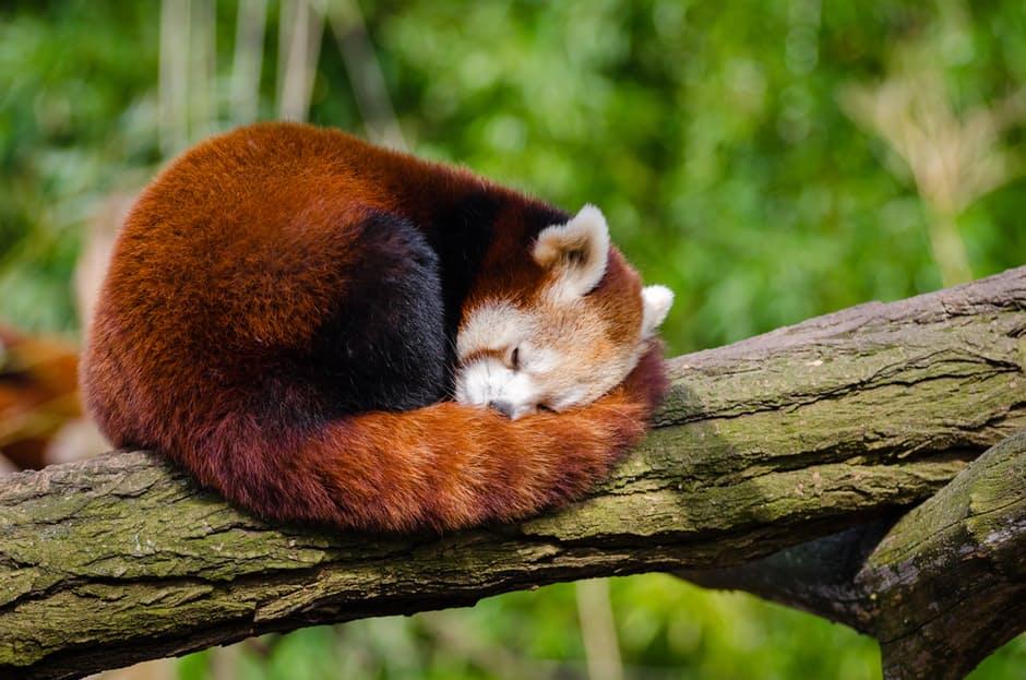 panda-hd-photos3