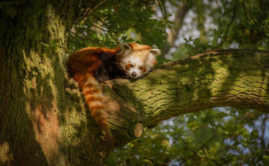 panda-hd-photos5