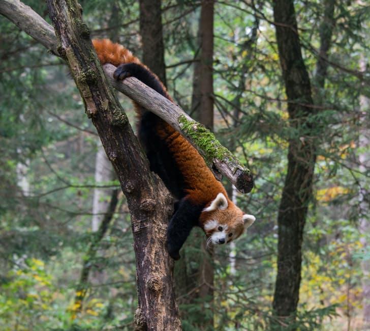 panda-hd-photos6