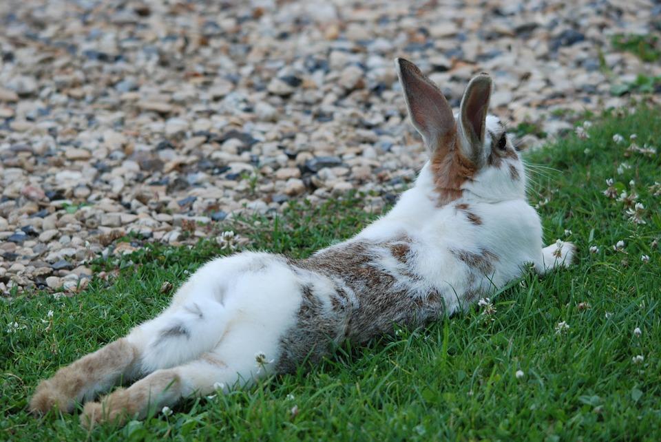 rabbit-1453009_960_720