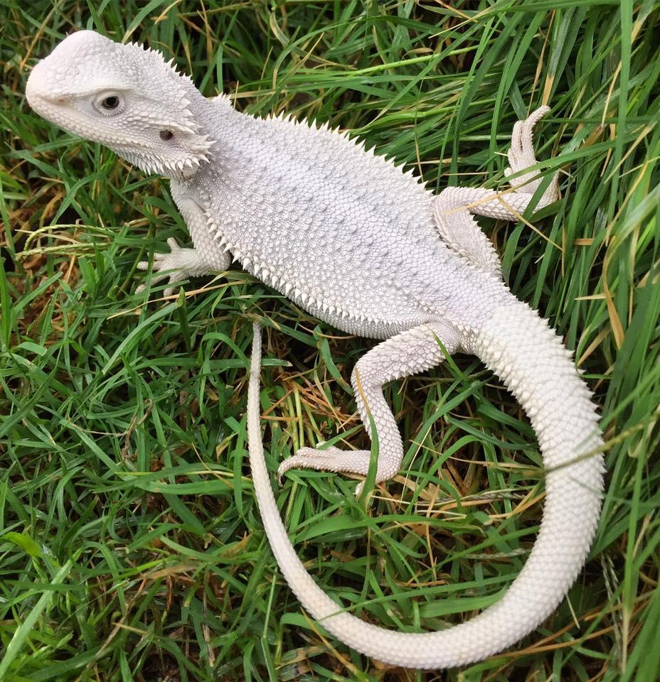 10000+ Amazing Albino Animals Are Around The World 40 ...