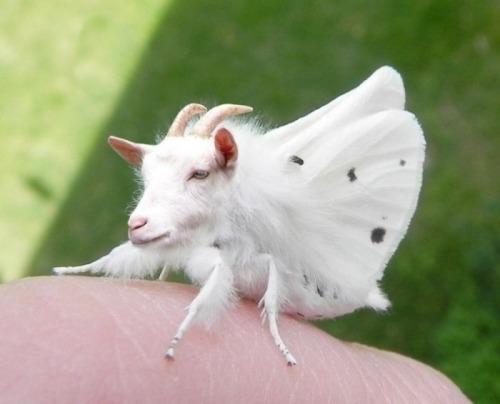 10000+ Amazing Albino Animals Are Around The World 40+ – New Cute Albino Animals Pics Added