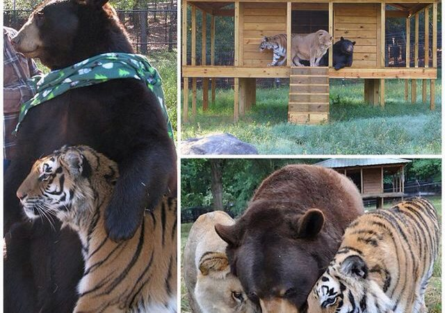 Animals Befriending Animals To Leave Better Examples For Humans – 13 Photo Stories