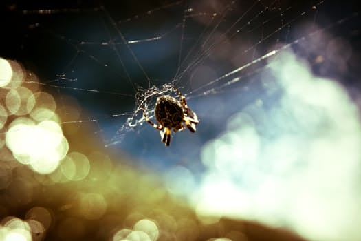 animal-insect-cobweb-spider