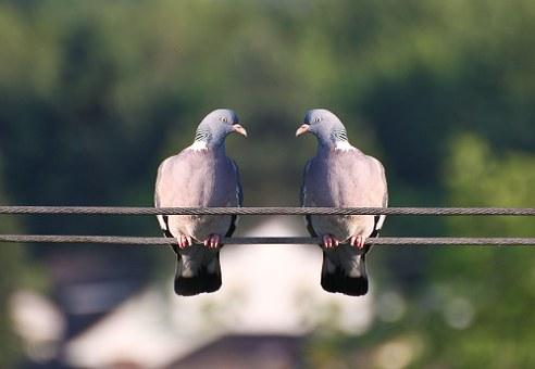 birds-368805__340