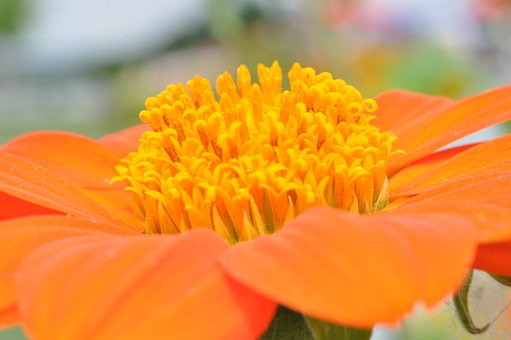 blossom-1586361__340