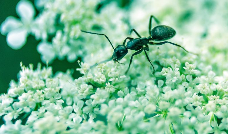 You Really Dont Know This Much About Ants – 4 Videos