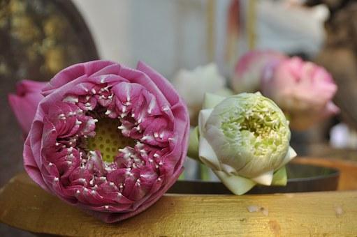 lotus-blossom-1488682__340
