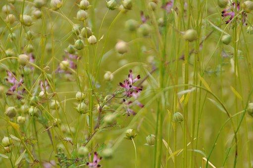 meadow-1678488__340