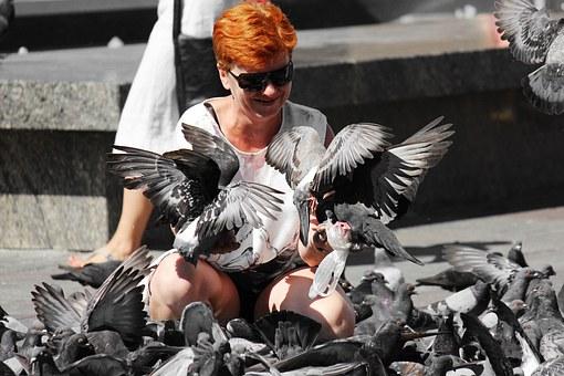 pigeons-1036863__340
