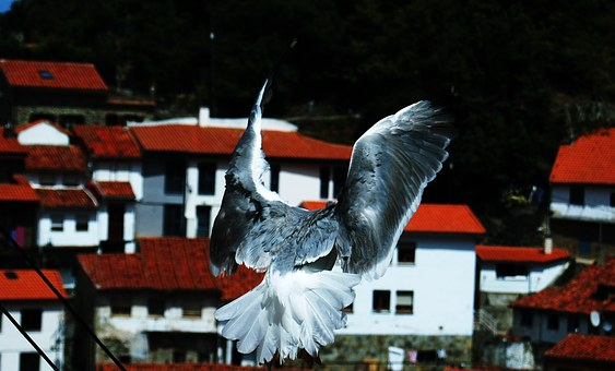 pigeons-116550__340