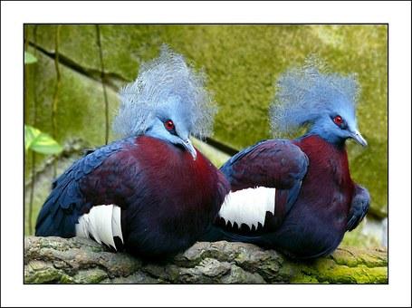 pigeons-256836__340