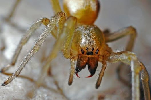 spider-arachnid-macro-nature-40545