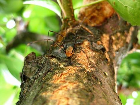 spider-legs-long-legs-nature-52525
