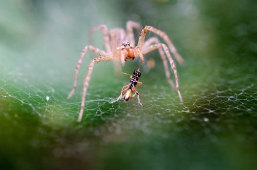 15+ Spiders Were Making Webs on World Wide Web And They Were Caught on Camera