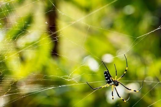 spider-network-cobweb-close-62308