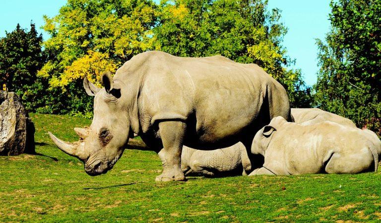 10+ Photos of Rhinoceros Enjoying Lives in Their Habitat