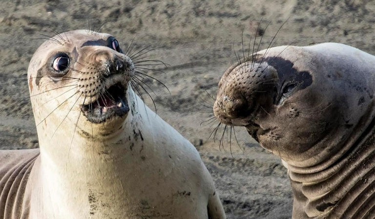 The New Entries For The Comedy Wildlife Photos Are A New Fun Chapter to Laugh at