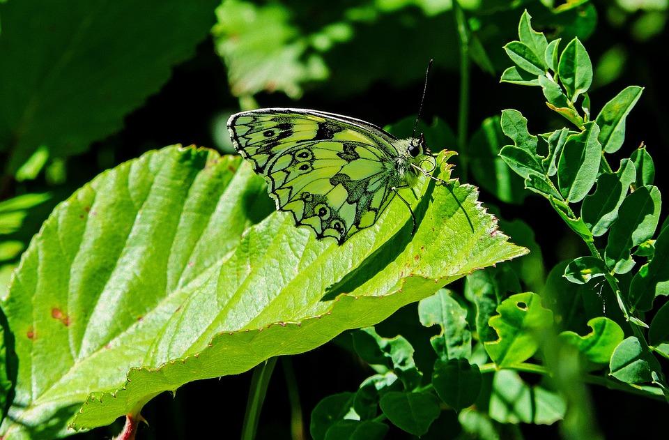 butterfly-2442467_960_720.jpg
