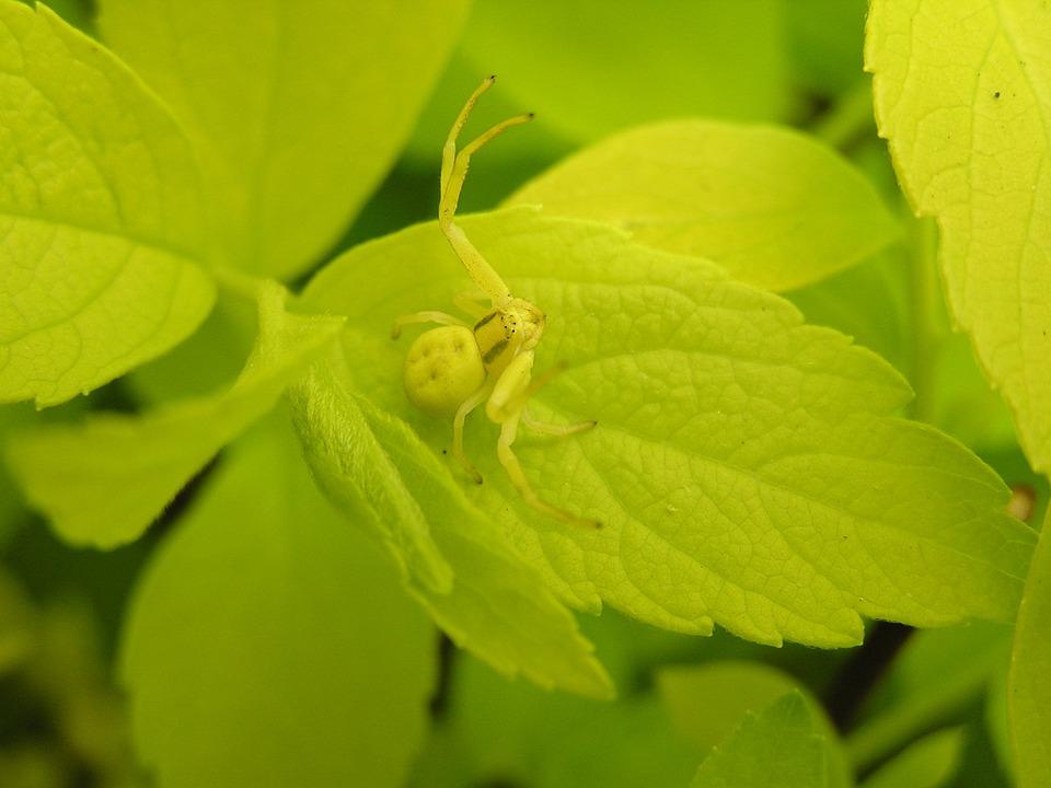 crab-spider-537160_960_720.jpg